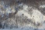 Губаха | gubaha 2011 2012 0485.jpg | ГЛЦ Губаха - сезон 2011-2012 | Горнолыжный центр Губаха горные лыжи сноуборд Город Губаха Фото