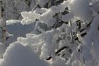Губаха | gubakha 2012 2013 1186.jpg | ГЛЦ Губаха - сезон 2012-2013 | Горнолыжный центр Губаха горные лыжи сноуборд Город Губаха Фото