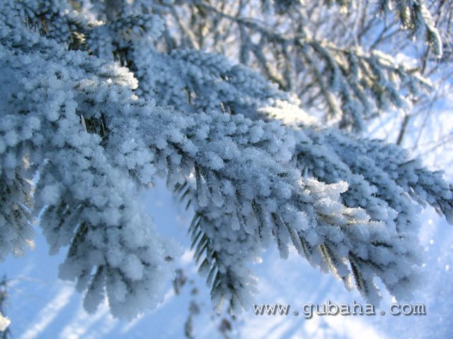 Губаха foto059.jpg Природа Губахи 26.11.2006 Горнолыжный центр Губаха горные лыжи сноуборд Город Губаха Фото