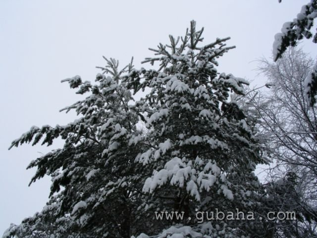 Губаха foto15.jpg Лыжная база Горнолыжный центр Губаха горные лыжи сноуборд Город Губаха Фото