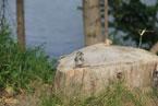 Губаха | nebesnaya yarmarka 2011 009.jpg | Небесная ярмарка Урала 2011 | Горнолыжный центр Губаха горные лыжи сноуборд Город Губаха Фото