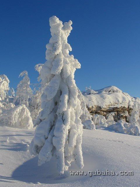 Губаха priroda03.jpg Природа Губахи - зима Горнолыжный центр Губаха горные лыжи сноуборд Город Губаха Фото