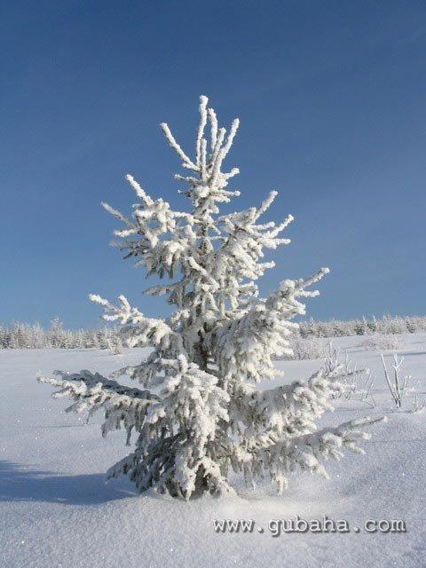 Губаха priroda05.jpg Природа Губахи - зима Горнолыжный центр Губаха горные лыжи сноуборд Город Губаха Фото