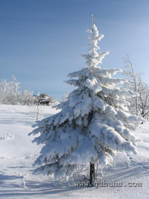 Губаха priroda06.jpg Природа Губахи - зима Горнолыжный центр Губаха горные лыжи сноуборд Город Губаха Фото