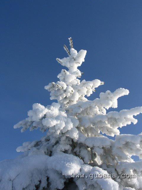 Губаха priroda07.jpg Природа Губахи - зима Горнолыжный центр Губаха горные лыжи сноуборд Город Губаха Фото