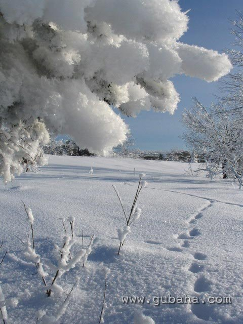 Губаха priroda08.jpg Природа Губахи - зима Горнолыжный центр Губаха горные лыжи сноуборд Город Губаха Фото