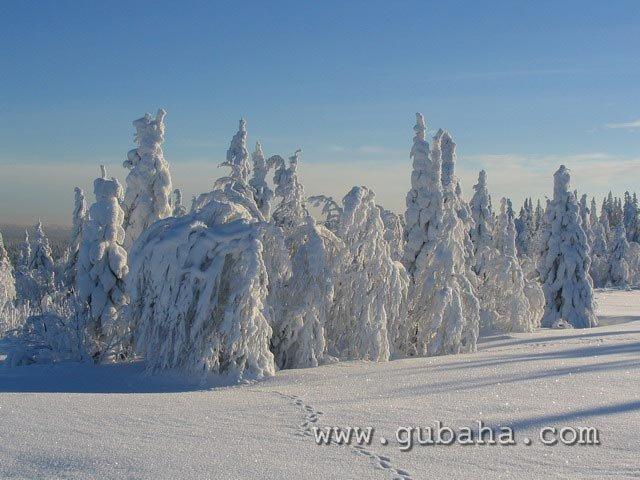 Губаха priroda15.jpg Природа Губахи - зима Горнолыжный центр Губаха горные лыжи сноуборд Город Губаха Фото