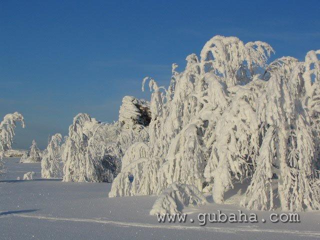 Губаха priroda18.jpg Природа Губахи - зима Горнолыжный центр Губаха горные лыжи сноуборд Город Губаха Фото