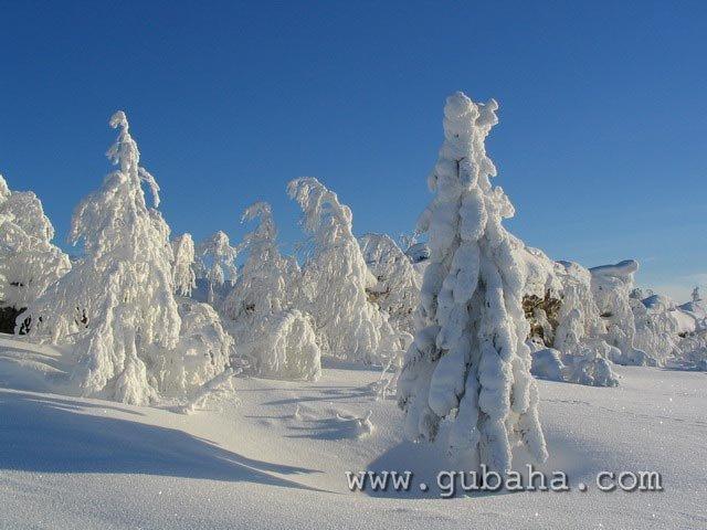 Губаха priroda19.jpg Природа Губахи - зима Горнолыжный центр Губаха горные лыжи сноуборд Город Губаха Фото