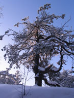 Губаха | 012.jpg | Каменный город - зима | Горнолыжный центр Губаха горные лыжи сноуборд Город Губаха Фото